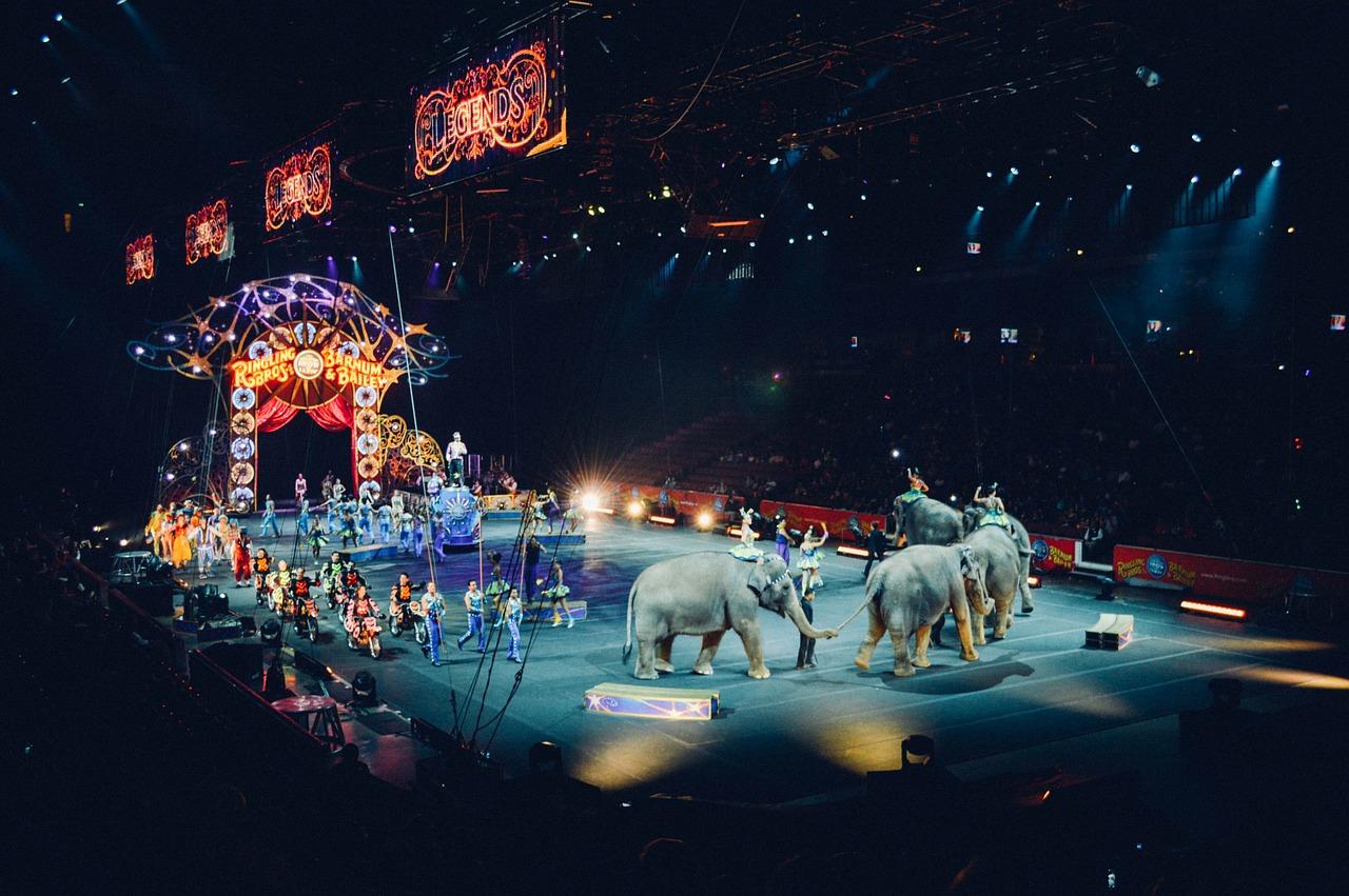 circus-828680_1280 (1)