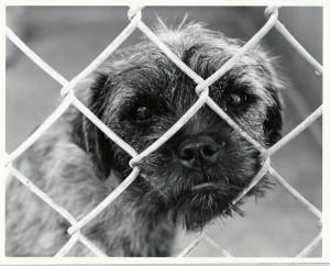 sad-dog-300x242